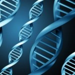 Why Is Mitochondrial DNA Important