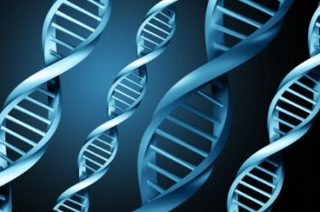DNA Why Is Mitochondrial DNA Important