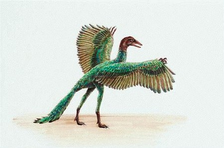 Archaeopteryx Become Extinct Why Did the Archaeopteryx Become Extinct